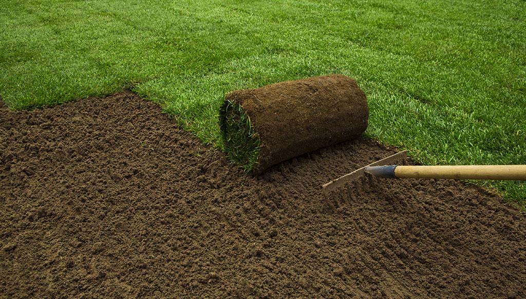 Pose de tourbe et pelouse